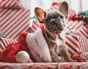 How to look after your dog this silly season