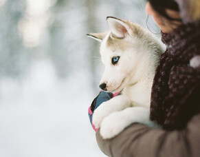 How can you keep your dog warm this winter?