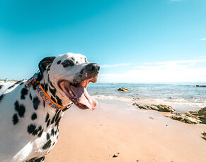 Summer activities for you and your dog